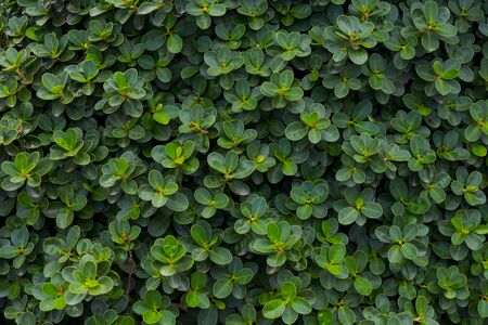 Green leaves. Abstract texture background. Stock Photo