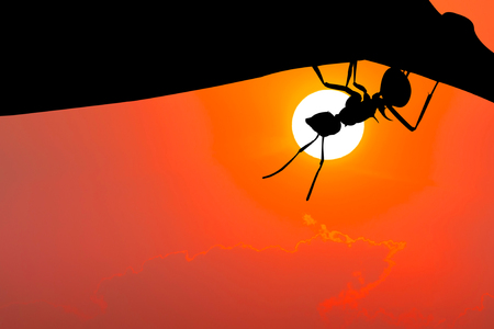 Silhouette image. Ant hanging on leaf.