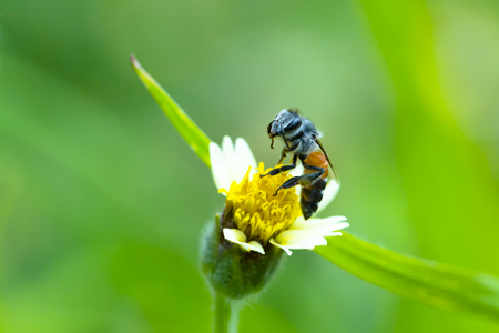 Little bee on grass flower. Beautiful nature.