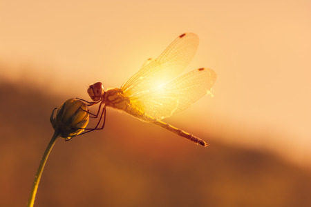 Sunset scene with dragonfly on a flower.  Light of the day. Start a new life
