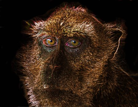 Close up on face of monkey on black background. Stock Photo