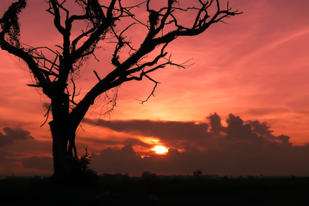 Silhouette image. Shadow of death tree with sunset. Background for haloween concept. Stock Photo