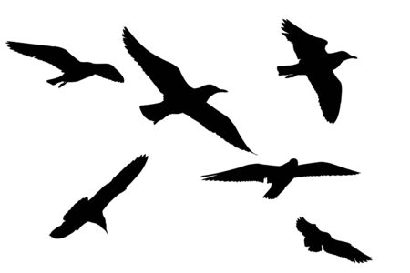 six objects: Silhouette image. Birds (seagull) flying isolated on white background. This has clipping path. Stock Photo