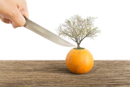 Orange fruit on old wooden plate.  Danger concept.