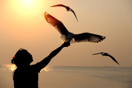 Silhouette of seagull flying and eat food from wohan hand at Bangpu, Thailand