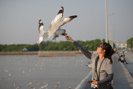 Seagull flying and eat food from wohan hand at Bangpu, Thailand