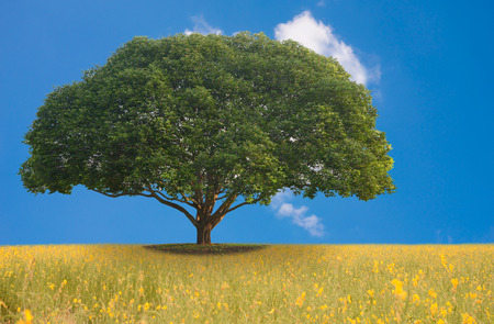 Beautiful nature for background. A big tree in the meadow.