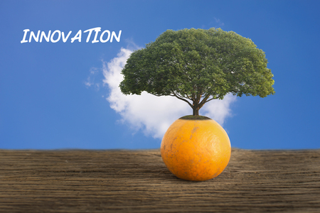 Big tree growing from orange fruit.  Innvation concept.