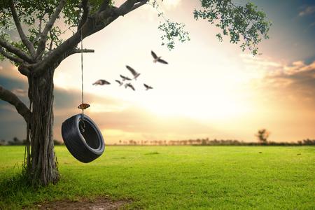 Hermosa naturaleza de fondo. Colgando neumáticos de goma debajo del árbol.