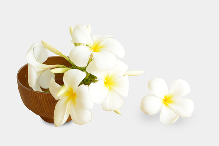 Beautiful White flowers (Plumeria)  isolated on white background.  This has clipping path. Stock Photo