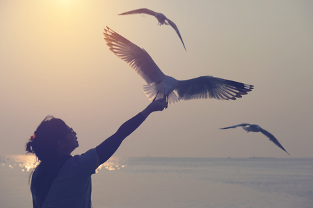 Bangpu, Samut Prankan, Thailand. Silhouette of seagull flying and eat food from wohan hand. Freedom of Life concept.