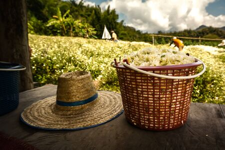 A Basket of White flowers (Chrysanthemum) and Blurry farm in background. 写真素材