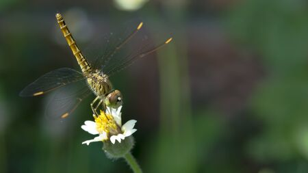 Dragonfly on wild grass flower. (Lack of direction, not lack of time, is the problem. We all have twenty-four hour days)
