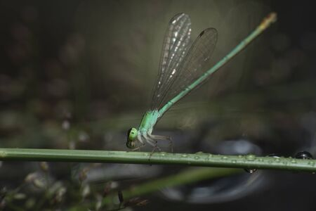 Dragonfly catching green branches over the water. Stock fotó