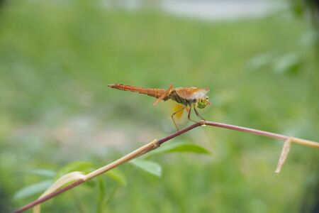 Dragonfly catching grass branches in the garden. Stock fotó