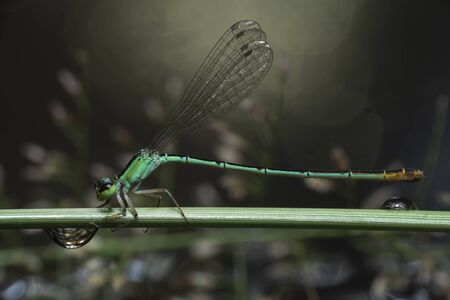 During the rainy season, A dragonfly resting on a branch. Stock fotó