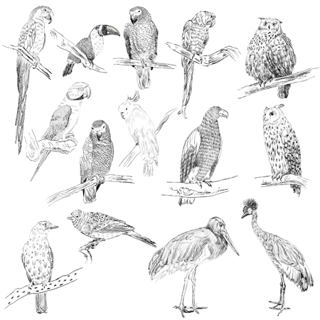 carnivore: Vector sketch of a birds. Hand drawn illustration