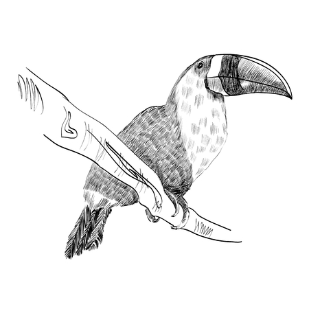 Vector sketch of a parrot. Hand drawn illustration Illustration