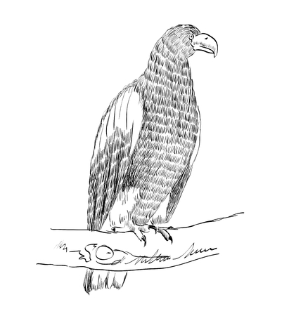 sketch of an eagle sitting on a branch