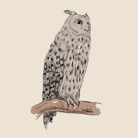 Sketch of owl on a beige  background