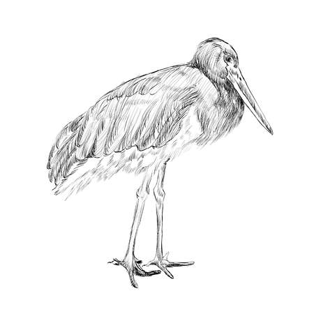 herons sketch, black and white isolated vector illustration Illustration
