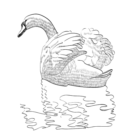 vector illustration sketch of a swan swimming