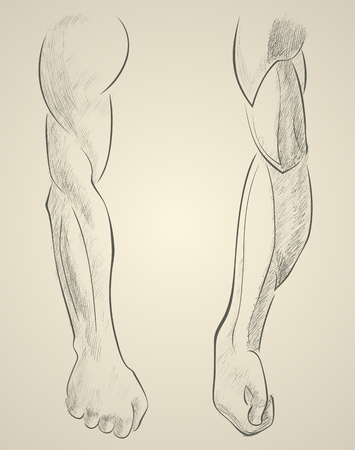 muscular male: sketch male muscular arms. Hand draw illustration. Illustration