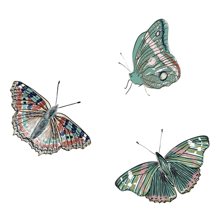 Cute set of realistic vector three butterflies. Illustration