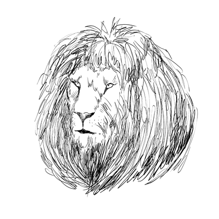 Vector sketch lion head on white background