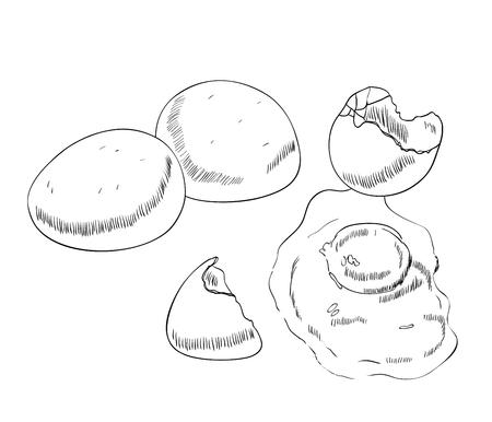 Vector chicken egg. Illustration