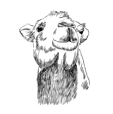 낙타의 스케치