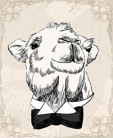 낙타의 스케치 스톡 콘텐츠 - 88360457