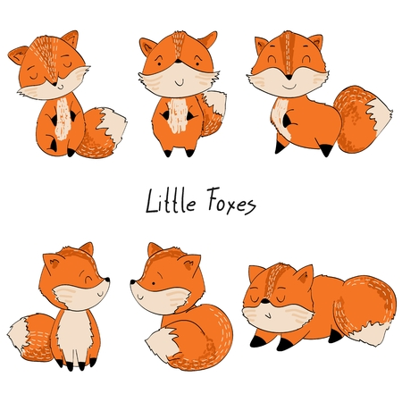 Set of foxes