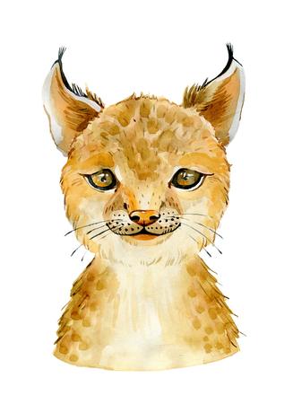 bobcat character portrait Banco de Imagens