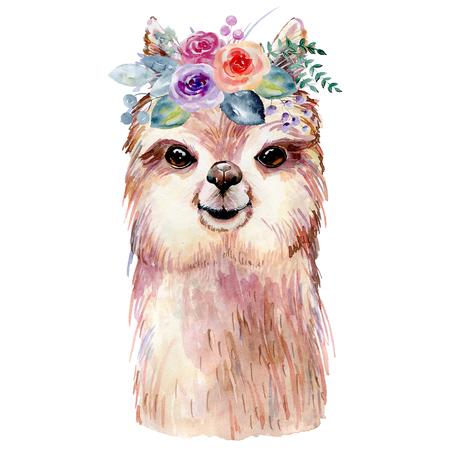 lama watercolor illustration