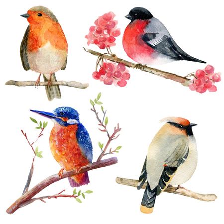 Watercolor birds set.