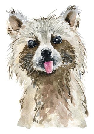 Watercolor cute raccoon.