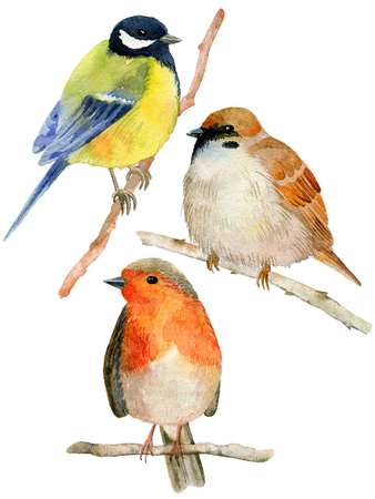 Watercolor birds set.