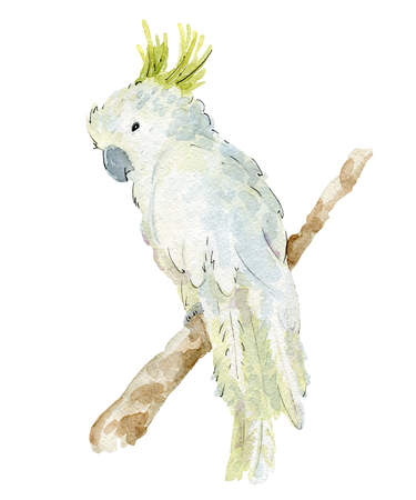 watercolor tropical parrot Stok Fotoğraf