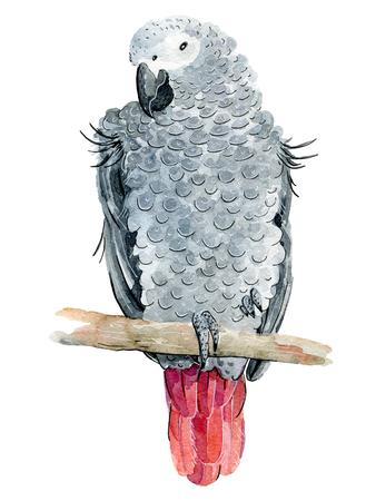 watercolor tropical parrot 版權商用圖片
