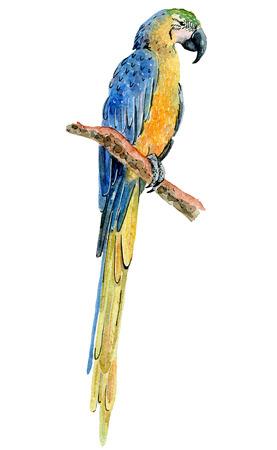 watercolor tropical parrot Reklamní fotografie