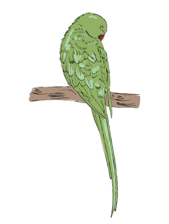 Vector sketch of a parrot. Hand drawn illustration 일러스트