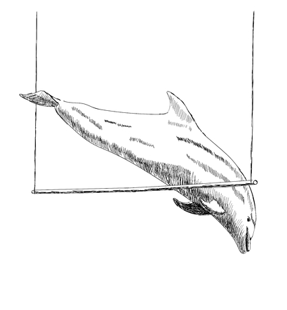 Illustration of dolphin Stock Vector - 122811343
