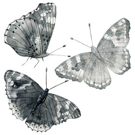 Set of watercolor butterflies Stock Photo