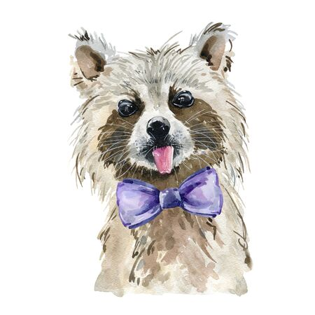 Watercolor cute raccoon.