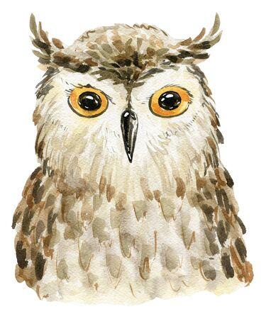 Watercolor cute owl.