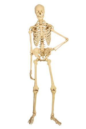 isolation: full human skeleton, isolation on white background