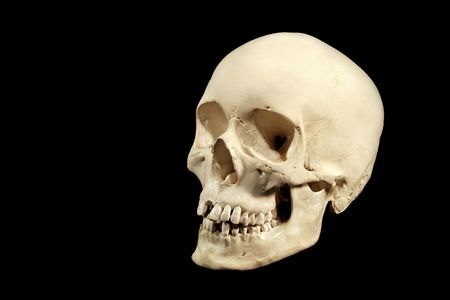 human skull facing left, isolation on black background