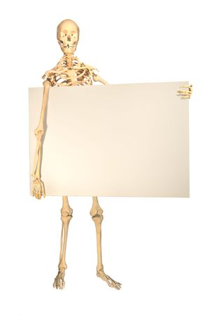 anatomically: Full human skeleton holding blank sign for copyspace, isolation on white