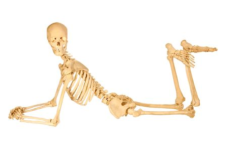 skeleton skull: Full human skeleton posing, isolation on white Stock Photo